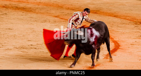 Bull with Matador, Torero or Toureiro in traditional clothing, bullfighting, bullring Plaza de Toros de la Real Maestranza de - Stock Photo