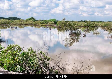 Mangrove swamp on Chuburna, Yucatan, Mexico.  Sky reflecion on the water. - Stock Photo