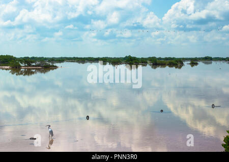 Mangrove swamp on Chuburna, Yucatan, Mexico. pink sand, sky reflection on the water, flamingos flying in the background and heron in the water. - Stock Photo