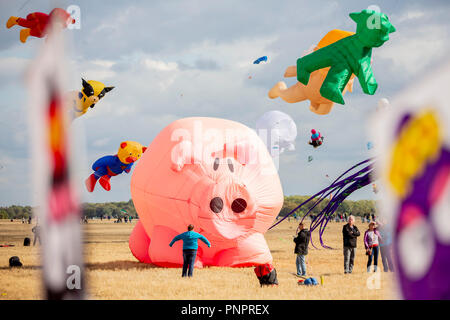 22 September 2018, Berlin: A kite in the form of a pig standing on the Tempelhofer Feld at the festival of giant kites of the housing association Stadt und Land. Kite aficionados from all over Europe show their up to 20 meters high and about 50 meters long kites. Photo: Christoph Soeder/dpa - Stock Photo