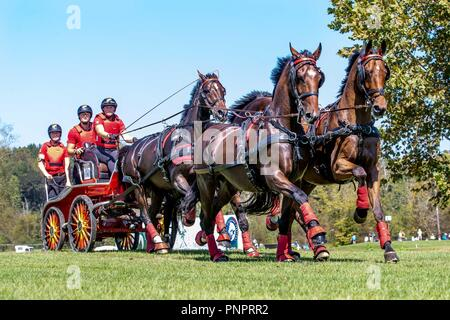 Tryon, USA. 22nd September 2018. Mareike Harm. GER. FEI World Team and Individual Driving Championships. Day 11. World Equestrian Games. WEG 2018 Tryon. North Carolina. USA. 22/09/2018. Credit: Sport In Pictures/Alamy Live News - Stock Photo