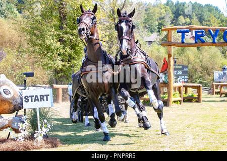 Tryon, USA. 22nd September 2018. Boyd Exell. AUS. FEI World Team and Individual Driving Championships. AUS. Day 11. World Equestrian Games. WEG 2018 Tryon. North Carolina. USA. 22/09/2018. Credit: Sport In Pictures/Alamy Live News - Stock Photo