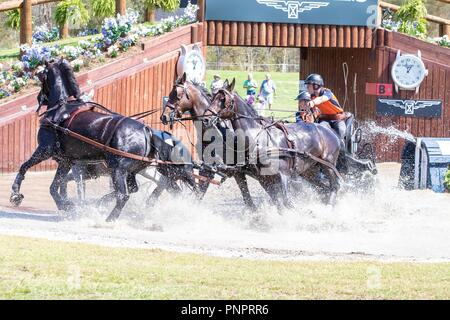 Tryon, USA. 22nd September 2018. Bram Chardon. NED. FEI World Team and Individual Driving Championships. AUS. Day 11. World Equestrian Games. WEG 2018 Tryon. North Carolina. USA. 22/09/2018. Credit: Sport In Pictures/Alamy Live News - Stock Photo
