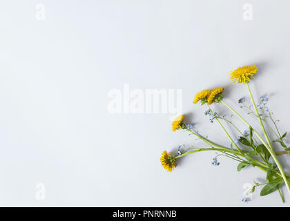 floral composition with five dandelions on light-gray paper - Stock Photo