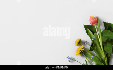 composition with dandelions, forget-me-not flowers and a tulip placed on light-gray paper, background for cards, invitations, with copy space - Stock Photo