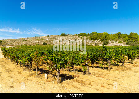View of vineyards in the countryside from the small French town of Gruissan in the south of France - Stock Photo