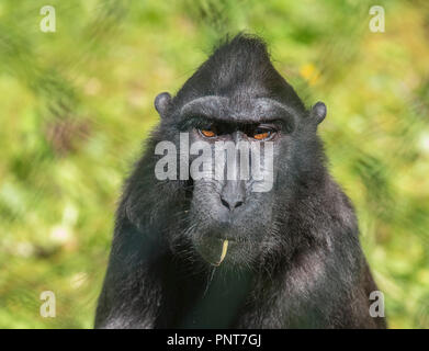 Random Photographs of Animals mostly in captivity captured in Paignton Zoo ,Devon. Mainly of Gorillas and Birds. - Stock Photo