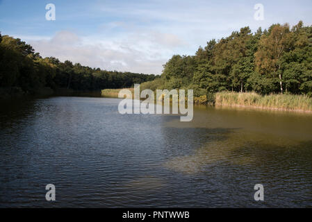 Prerowstream is an arm or inlet of the Baltic Sea in Northeastern Germany surrounded by a forest with Scots Pine, English Oak and Common Beech. - Stock Photo