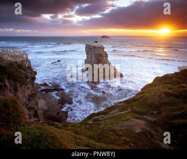 New Zealand. North Island. Auckland Region. Muriwai Beach. - Stock Photo