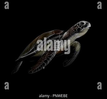 Portrait of a big sea turtle on a black background - Stock Photo