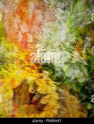 DIGITAL ART: Floral Celebration - Stock Photo