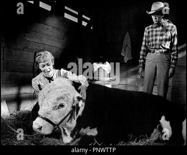 Prod DB © Universal / DR RANCHO BRAVO (THE RARE BREED) de Andrew V. McLaglen 1966 USA Avec Juliet Mills et James Stewart western, pere et fille, taureau, etable - Stock Photo