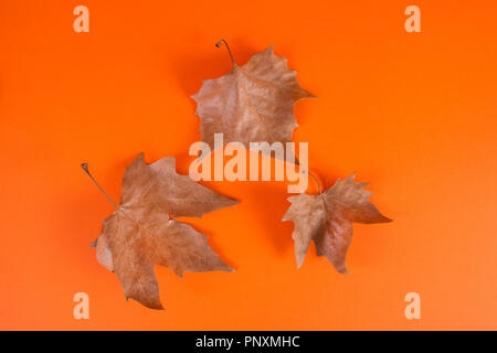 Dray fallen leaves isolated on orange background in studio. Autumn seasonal concept. Close up - Stock Photo