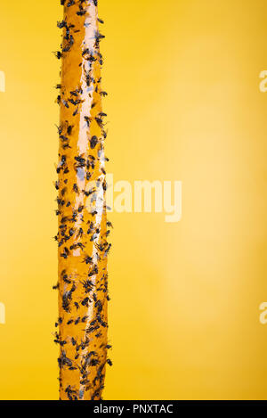 Sticky flypaper, trap for flies or fly-killing device, on yellow background. Also known as fly ribbon or fly strip - Stock Photo