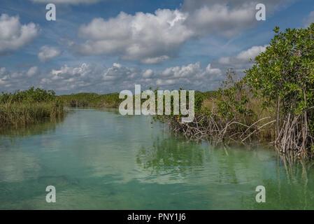 A shallow river runs through the mangroves in the lagoon at Sian Ka'an Reserve near Tulum in the Mexican Yucatan - Stock Photo