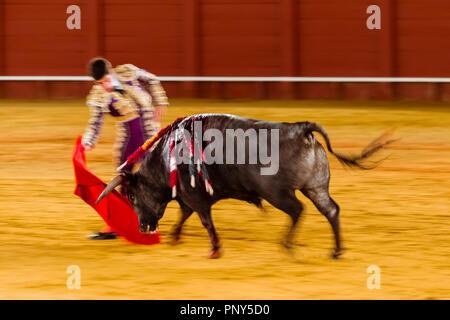 Racing bull with Matador, Torero or Toureiro in traditional dress, third part, so-called Faena, bullfighting, bullring Plaza de - Stock Photo