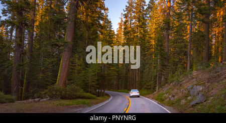 Road amidst towering trees in Yosemite, California - Stock Photo