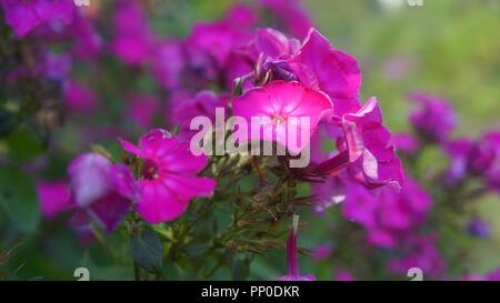 Bilder aus idyllischen Kleingärten und Schrebergärten - Stock Photo