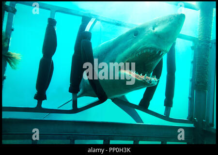 Prod DB © Incentive Filmed Entertainment - Next Films - Sierra Pictures / DR SHARK 3D (SHARK NIGHT 3D) de David R. Ellis 2011 USA requin, horreur - Stock Photo