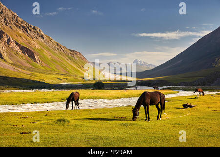 Horses in near the river in Terskey Alatau mountains of Kyrgyzstan, Central Asia - Stock Photo