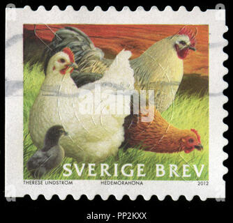 Postmarked stamp from Sweden in the Poultry series issued in 2012 - Stock Photo