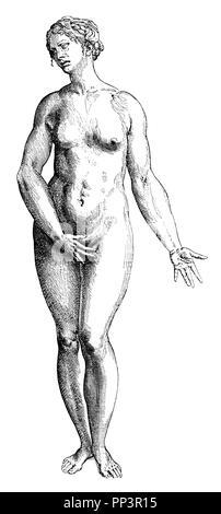 Female ideal figure. After Titian's disciple Stephan von Calcar, from Vesalius, Fabrica corporis humani,   1910 - Stock Photo