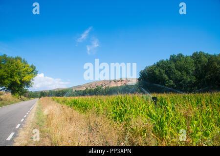 Corn field and byway. Cogolludo, Guadalajara province, Spain. - Stock Photo