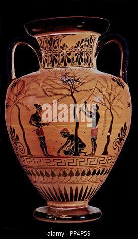 Greek School Amphora Representing The Olive Harvest 520 Bc London