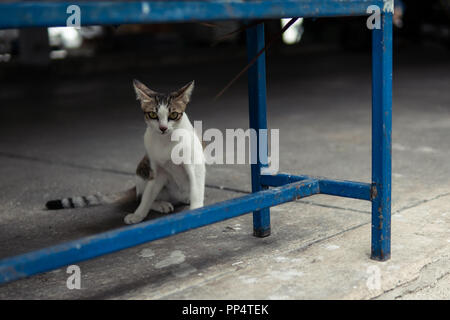 The cat under a blue metal bench - Stock Photo