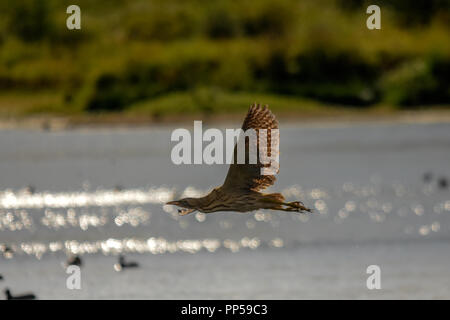 Rutland water Oakham 23rd September 2018; Warm windy day with some  early migration. Credit: Clifford Norton/Alamy Live News - Stock Photo