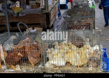 Live poultry crammed into crates on sale at an outdoor market in Espinho, Portugal. - Stock Photo
