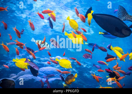 Tropical reef with a rainbow assortment of colorful fish at the Georgia Aquarium in downtown Atlanta, Georgia. (USA) - Stock Photo