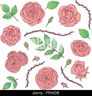 Vector set of pink rose flowers with buds, leaves and thorny stems line art isolated on the white background. Hand drawn floral collection of vintage  - Stock Photo