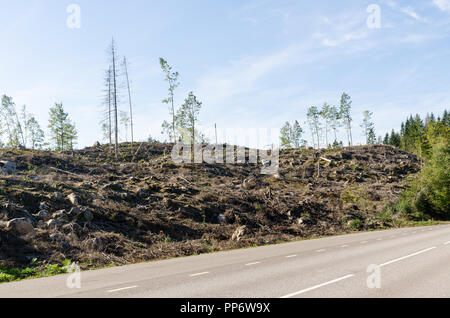 Clear cut forest landscape by roadside - Stock Photo