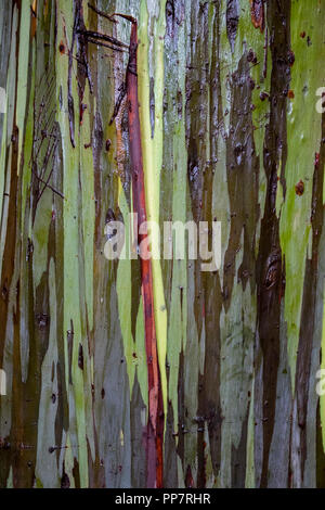 Painted Eucalyptus Tree Bark Close Up Stripes in Red Green Gray and Brown - Stock Photo