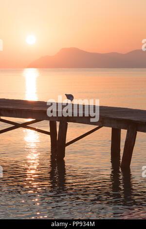 Europa Spanien  Nord Mallorca Playa de Muro, langer Holzsteg in der Bucht von Alcudia bei Sonnenaufgang, Vögel genießen die Morgenstunde - Stock Photo