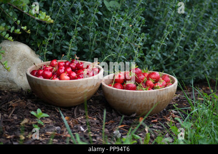 Cherries and strawberries in bamboo bowls - Stock Photo