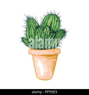 Mexican Cactus with Spines or Thorns and Flowers in clay pot as Isolated Clipart for Cinco De Mayo Holiday or Celebration. Edible Esculent Cacti Like Saguaro, Indian Fig or Mammillaria. Latin theme - Stock Photo
