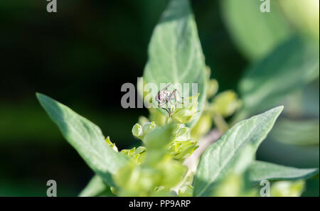 Macro of a Tiny Fly Perched on Green Leaves - Stock Photo