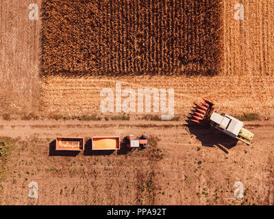 Aerial photography of combine harvester pouring harvested corn kernels into tractor cargo cart - Stock Photo
