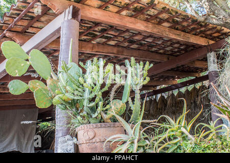 mage of cactus in pots on a terrace with tile roof - Stock Photo