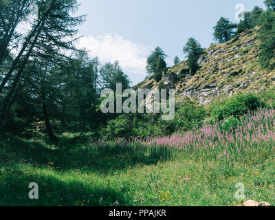 Swiss mountains valley and flowers sky trees green panorama near the Ritom lake much wood of the forest at very high heights - Stock Photo