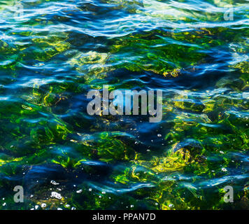 surface of the sea of transparent water, under the water floats a jellyfish, a summer day - Stock Photo