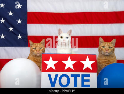 3 cats sitting behind an election ballot box with VOTE on the front, red white blue balloons and American Flag in the background. Copy space above - Stock Photo