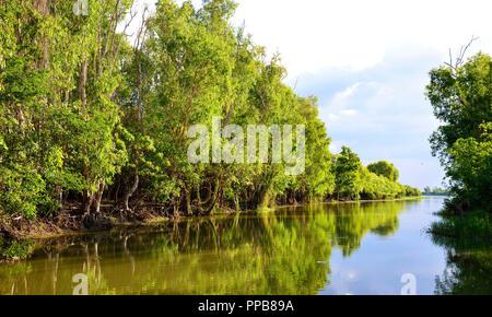 Yellow Water Billabong, Kakadu National Park, Northern Territory, Top End, Australia - Stock Photo