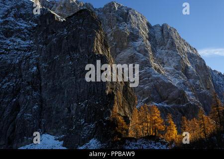 golden larches in the mountains during fall season, Slovenia - Stock Photo