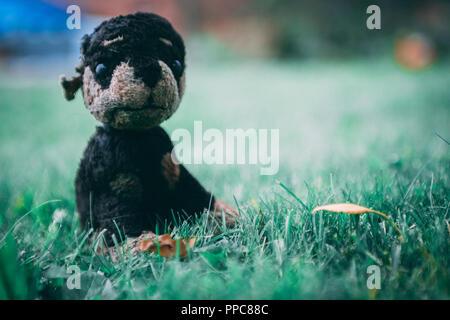 toy cuddly dog toy on grass - Stock Photo