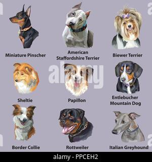 Set of colorful vector portraits of dog breeds ( border collie, papillon, American Staffordshire Terrier, sheltie, Greyhound, Rottweiler, Miniature Pi - Stock Photo