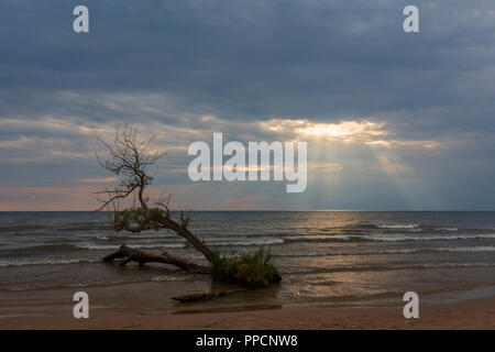 A lone tree that survived a hurricane over 20 years ago, lives along the shore of Lake Ontario in Town of Ellisburg, NY. - Stock Photo