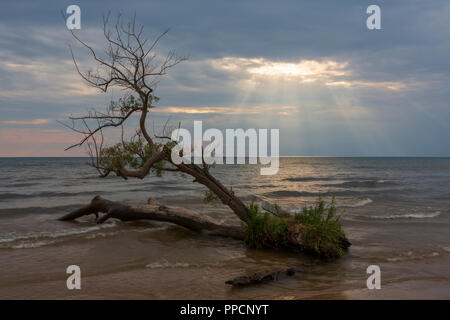 A ray of light breaks through a cloudy sky to illuminate a tree growing on a beach in Southwick Beach State Park, Ellisburg, New York State located on - Stock Photo